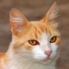image/cat.png
