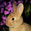 image/rabbit.png